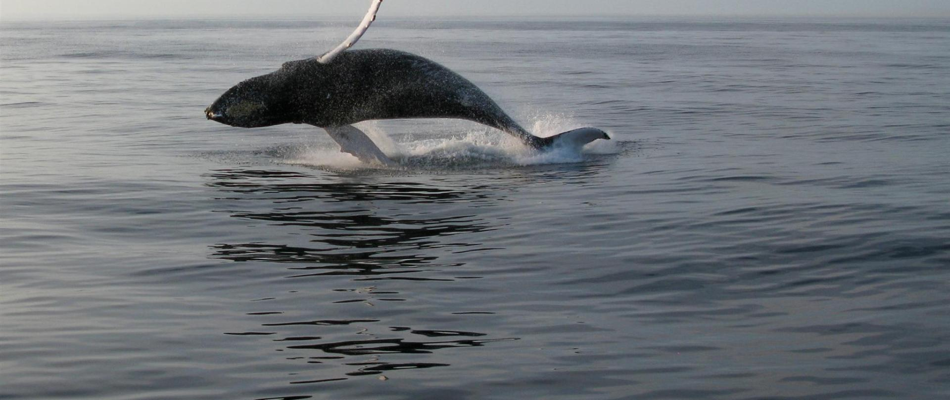 bar-harbor-free-whale.jpg