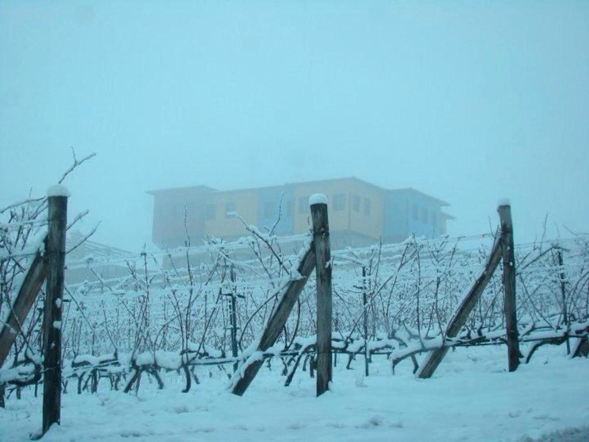 Misty vineyard