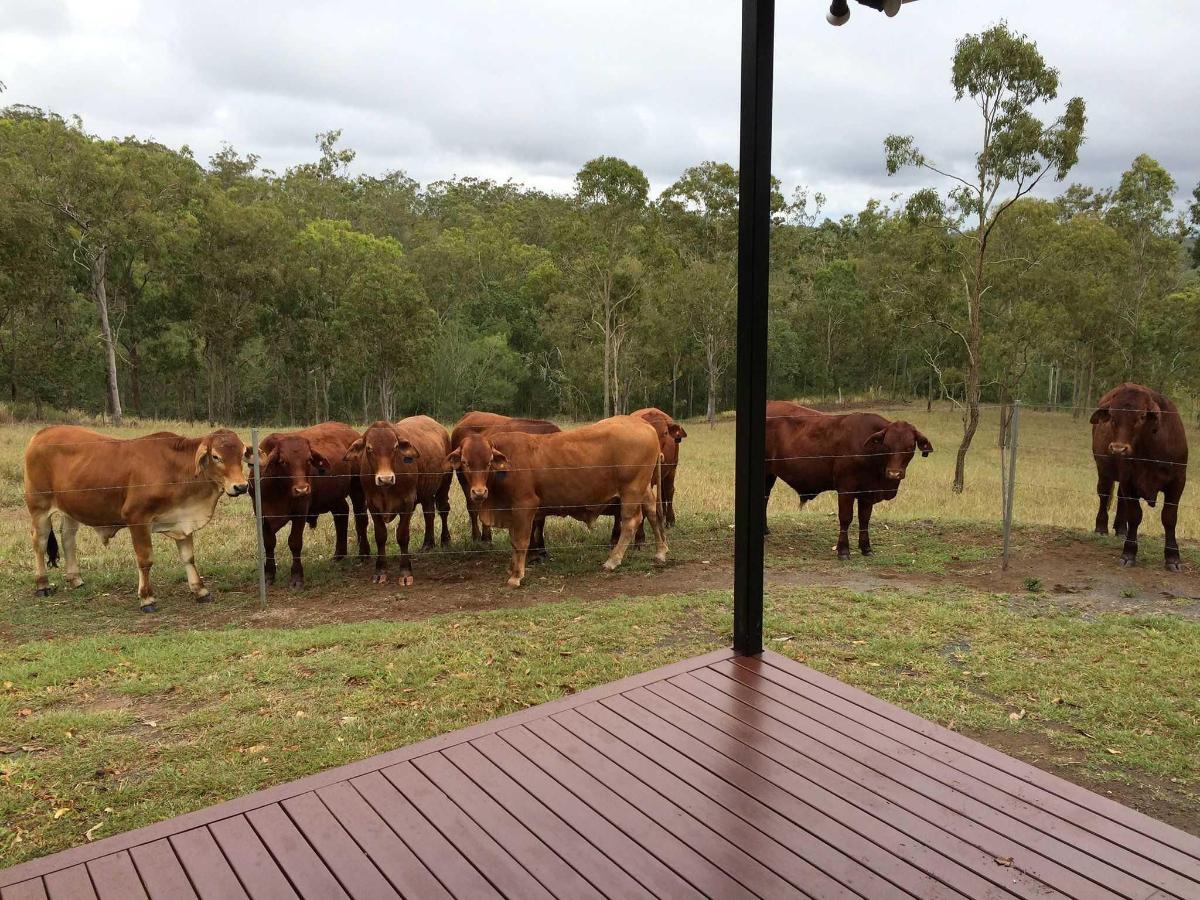Farmstay Animals