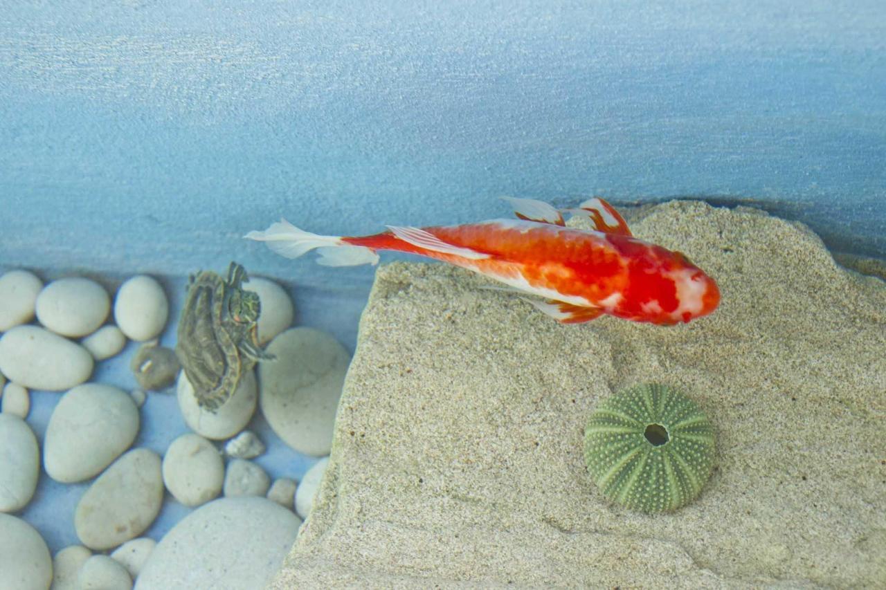 Gold Fish & Turtle