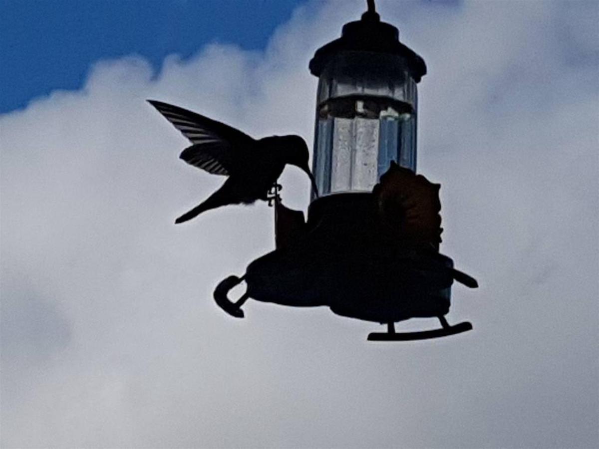 Pássaros(1).jpg