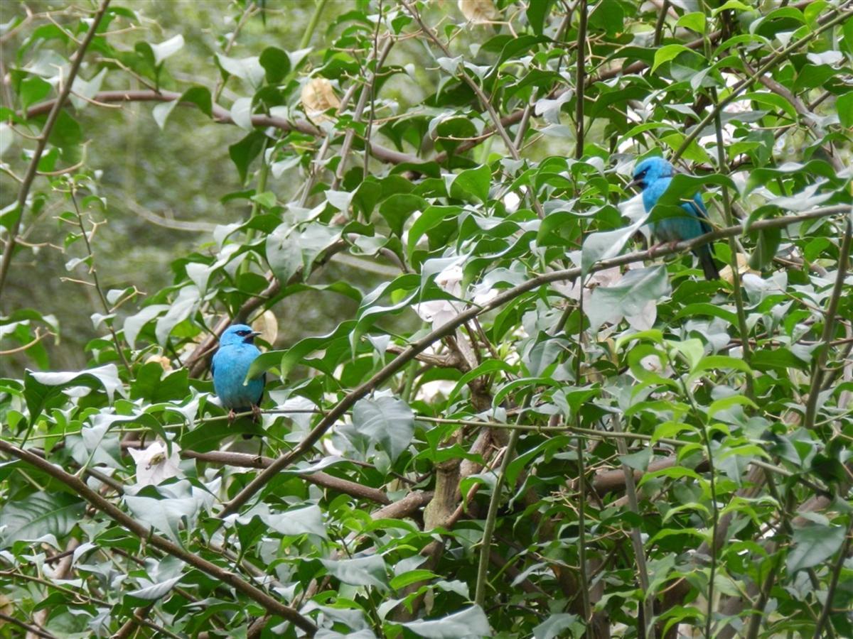 Pássaros(8).jpg