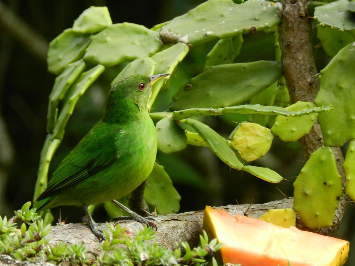 Pássaros(9).jpg