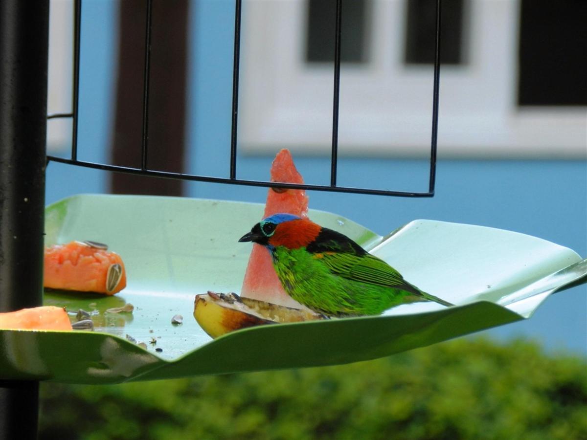 Pássaros(12).jpg