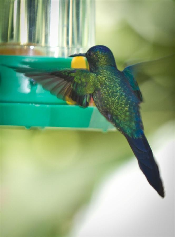 Pássaros(14).jpg