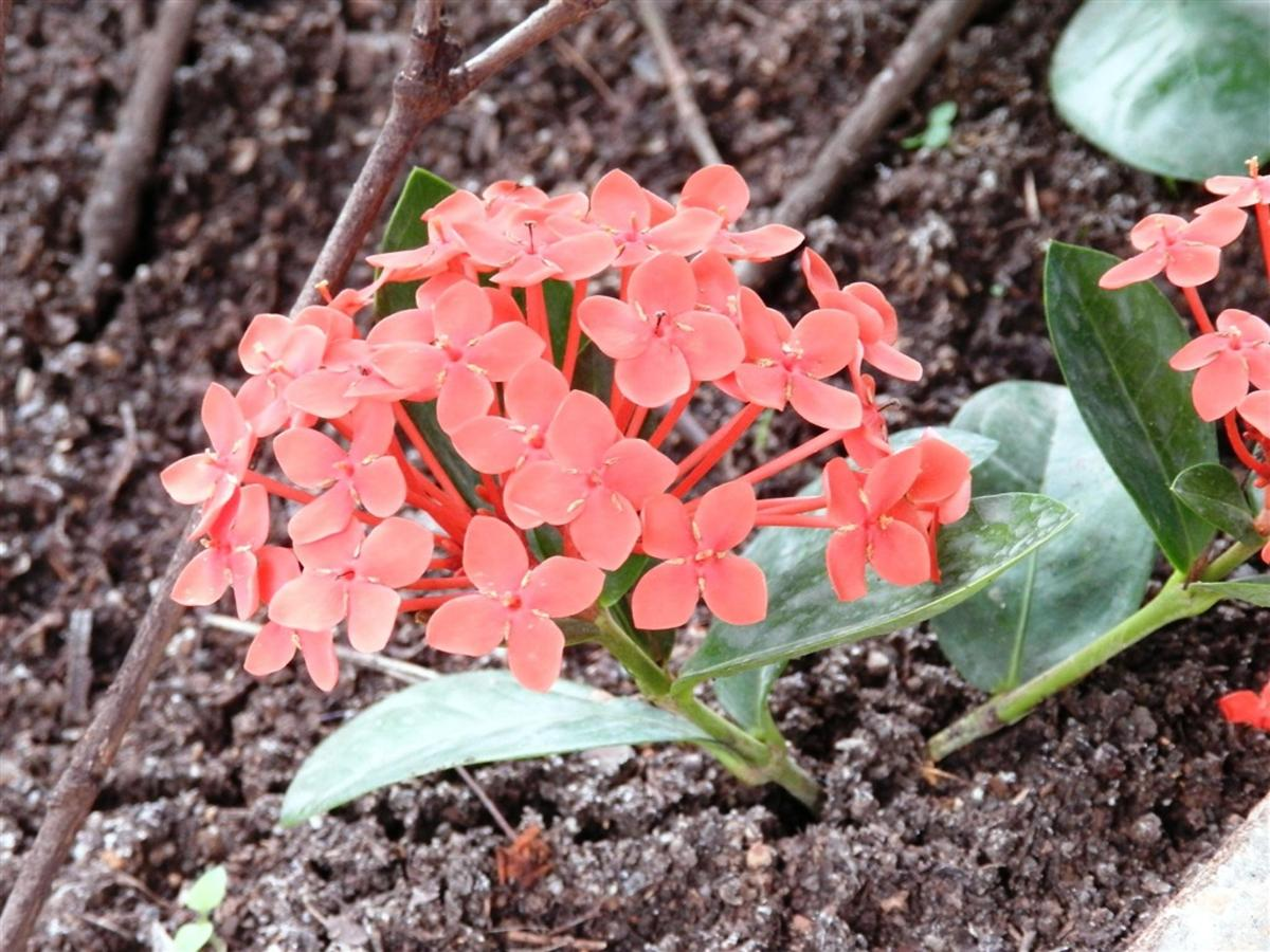 Flores e Frutas Pousada Vila das Pedras (7).jpg