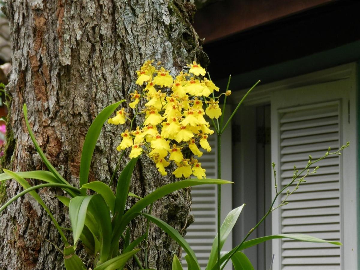 Flores e Frutas Pousada Vila das Pedras (17).jpg