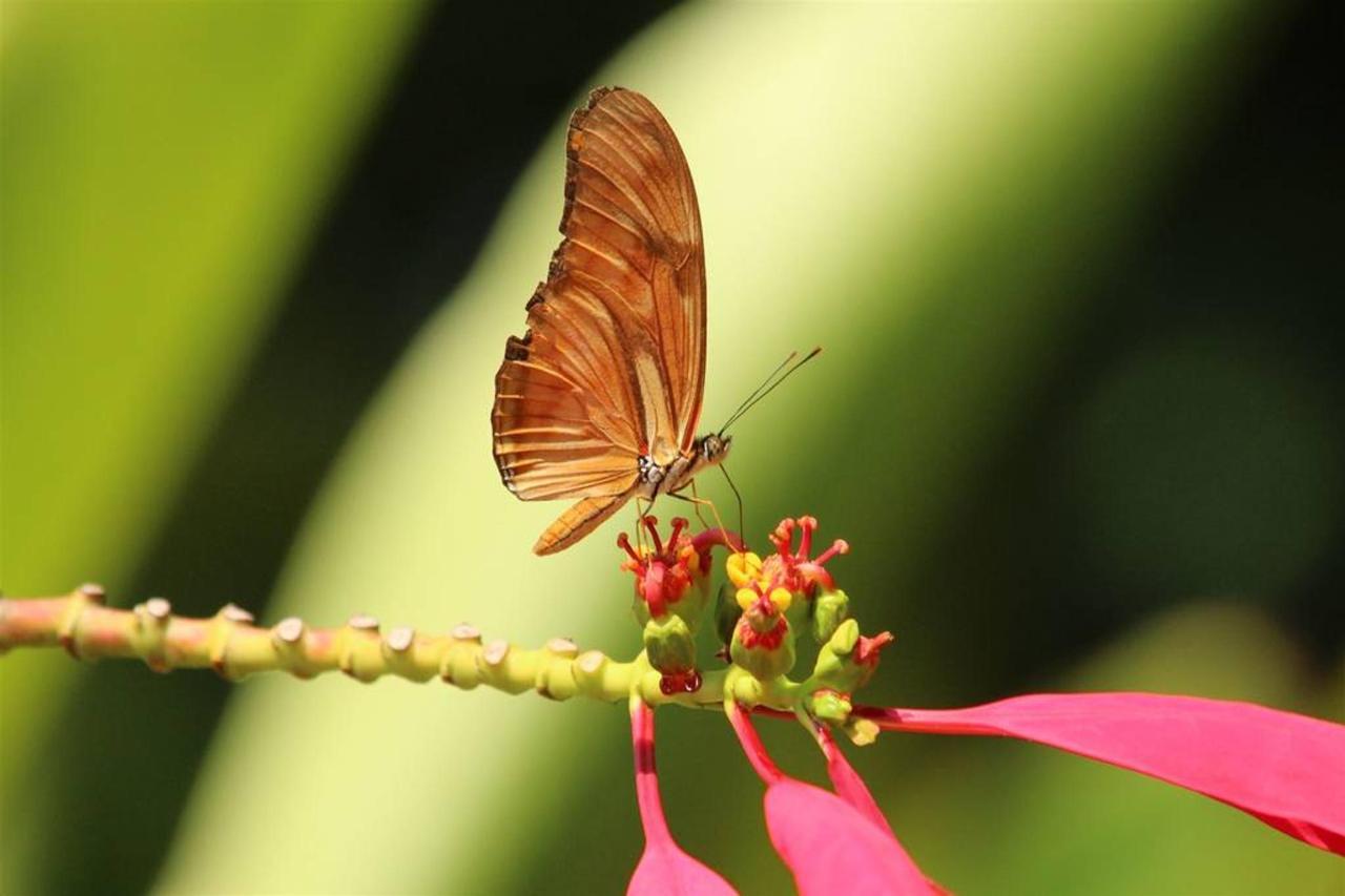 Flora y Fauna-Fundo-San-Jose-Junin-Peru-12.JPG