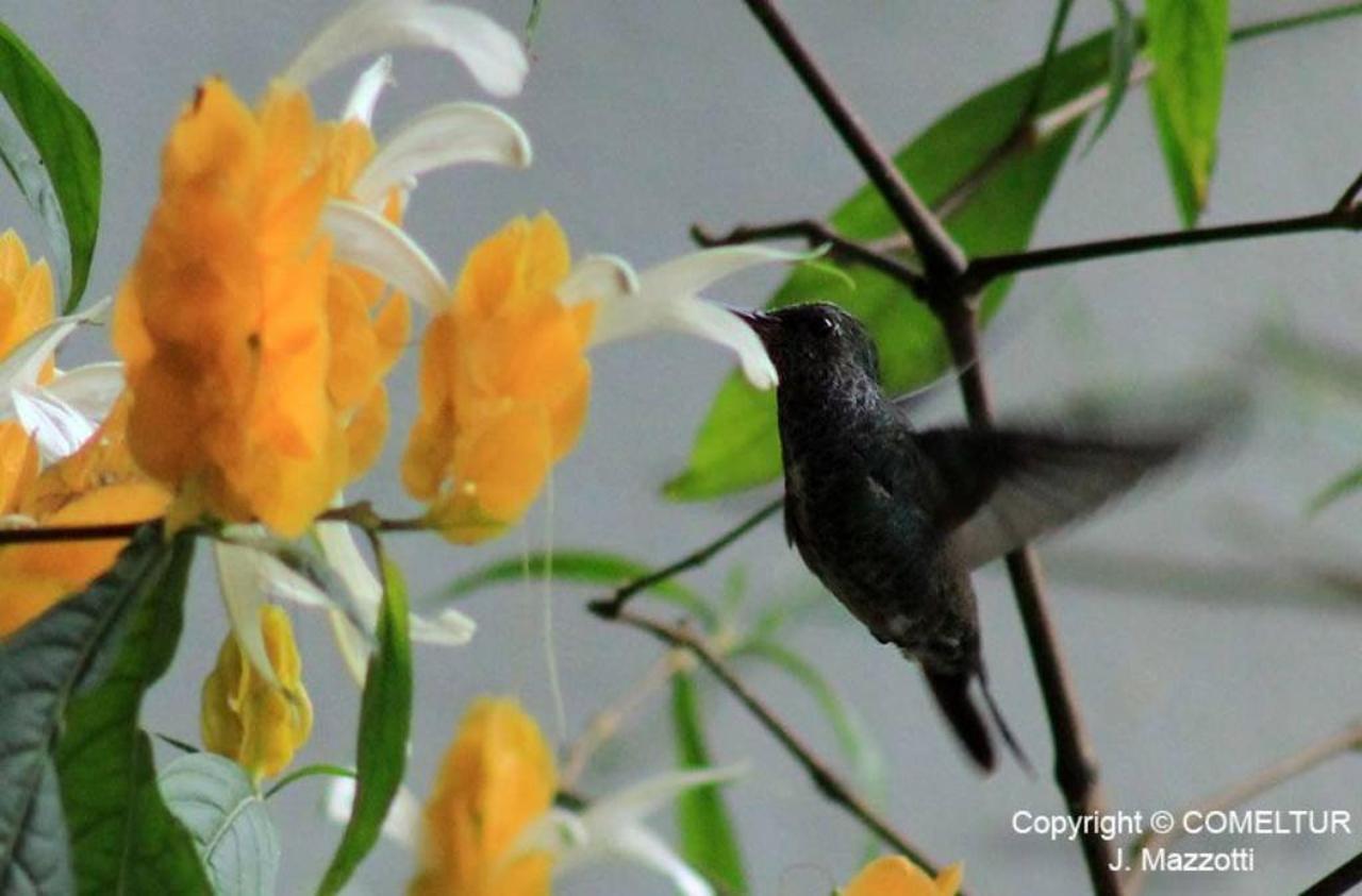 Flora y Fauna-Fundo-San-Jose-Junin-Peru-22.jpg
