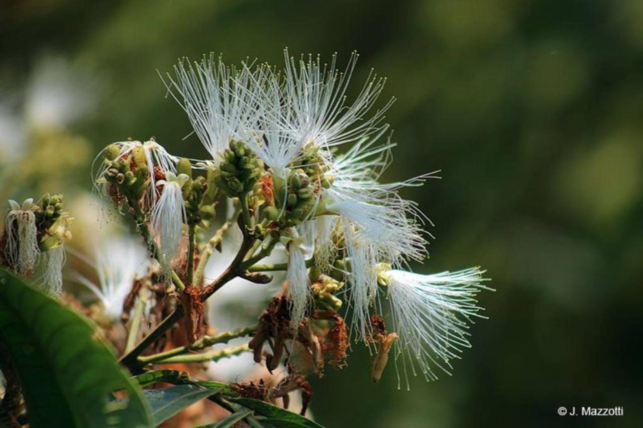 Flora y Fauna-Fundo-San-Jose-Junin-Peru-35.jpg