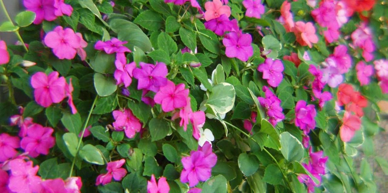 Flowers | Nantucket Inn.jpg
