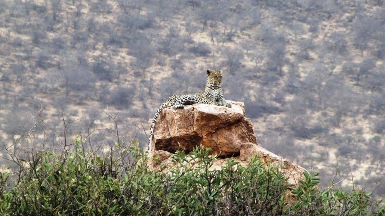 Leopard sightings on safari.jpg