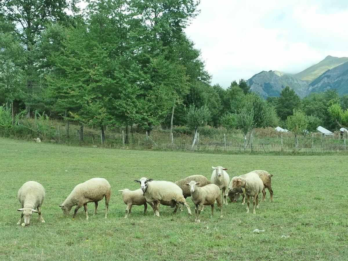 Allevamento di Pecore