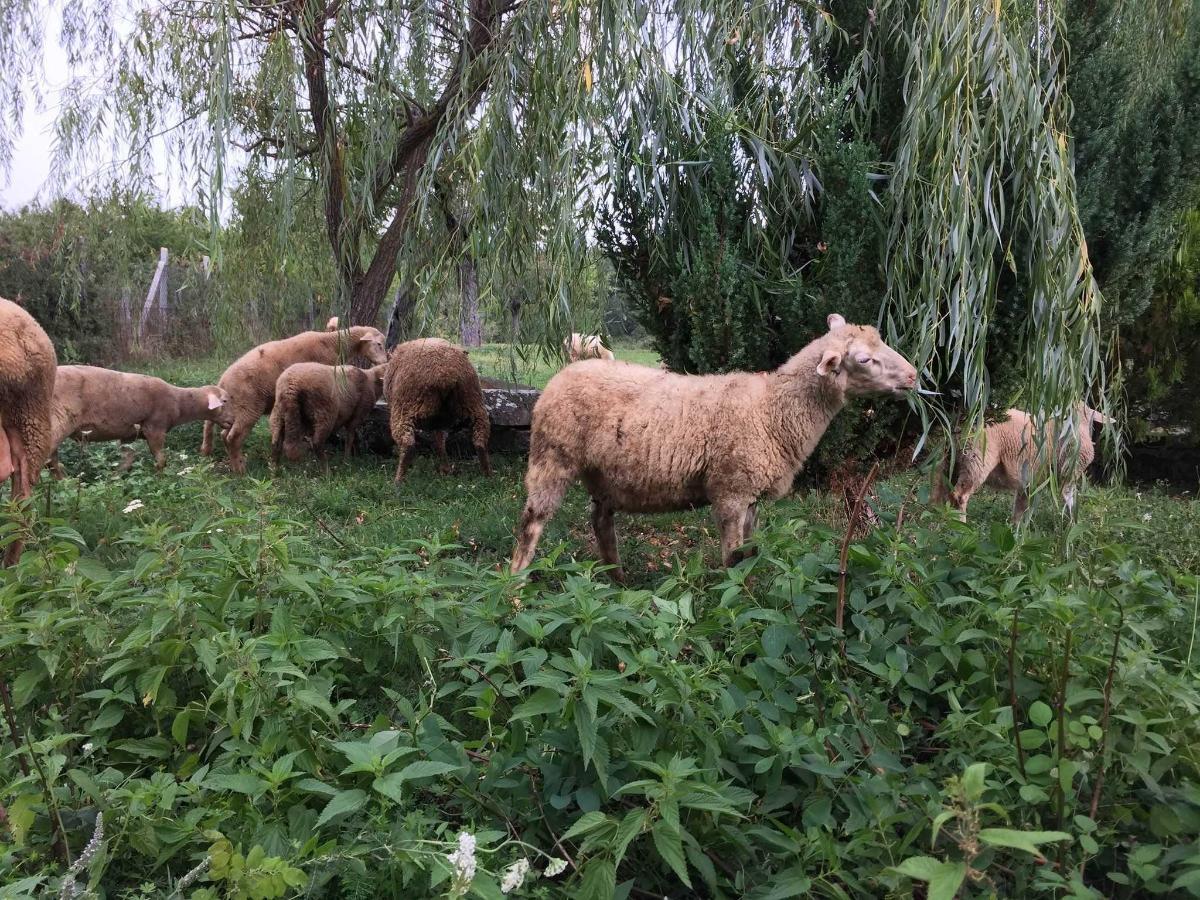 Allevamento Pecore