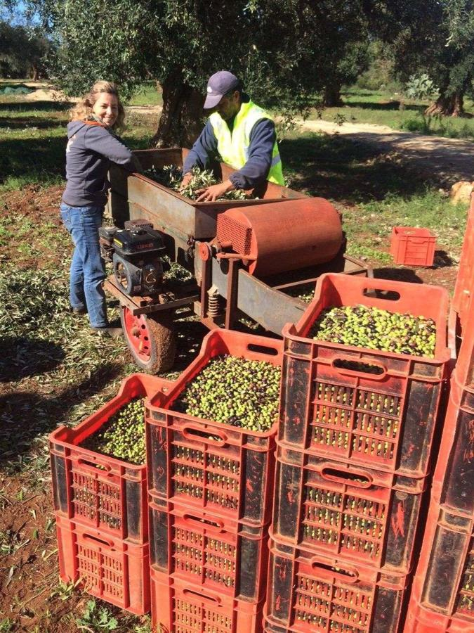 It's harvest time! 2015