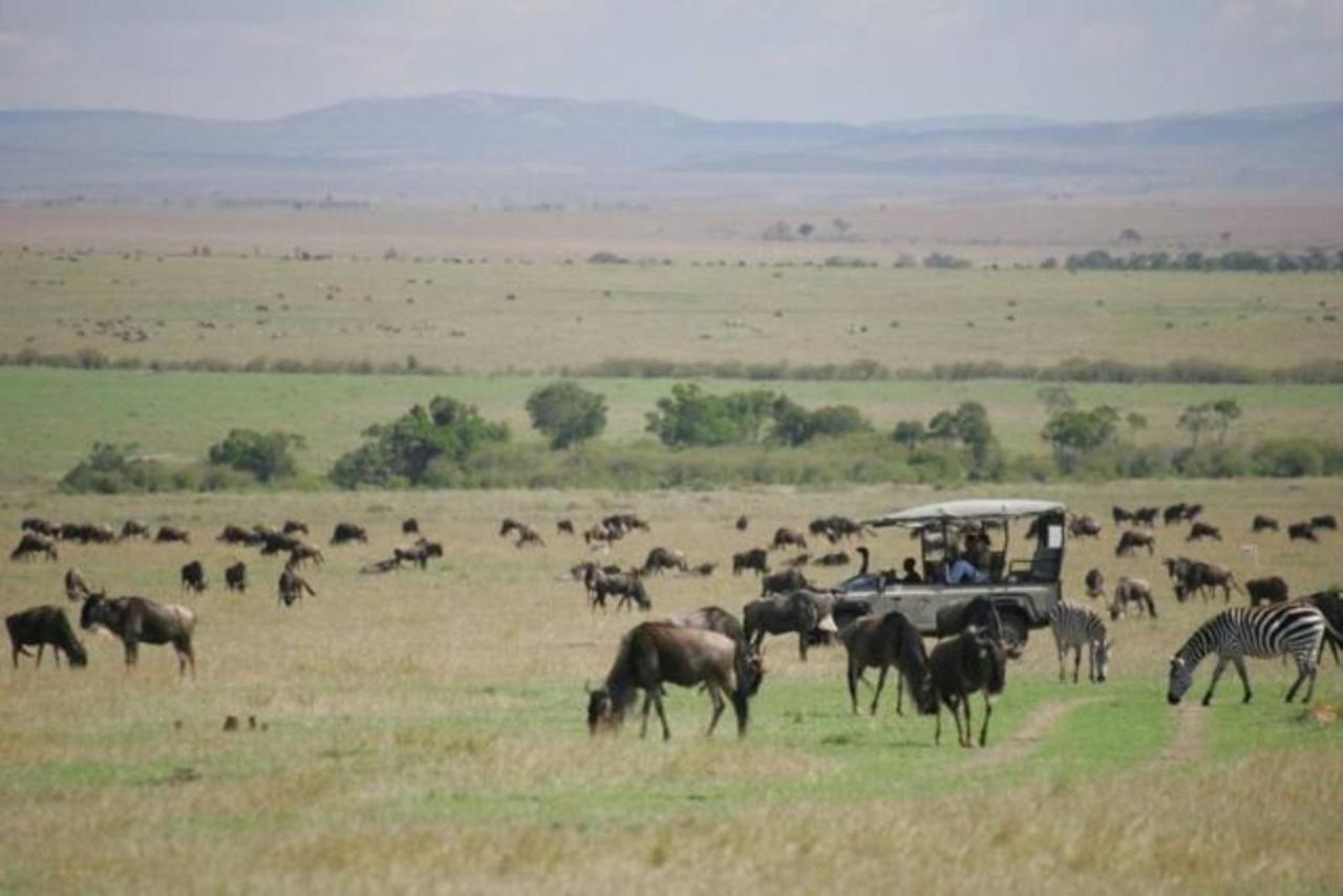 Wildebeests.jpg