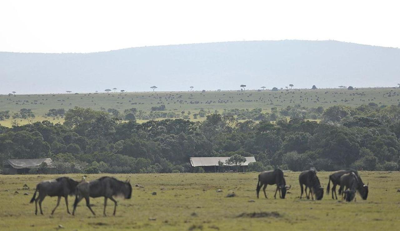 Surrounded by the famous Masai Mara migration.jpg