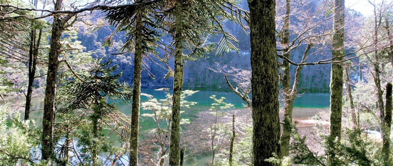 pan-lago-chico-huerquehue.jpg.1024x0.jpg