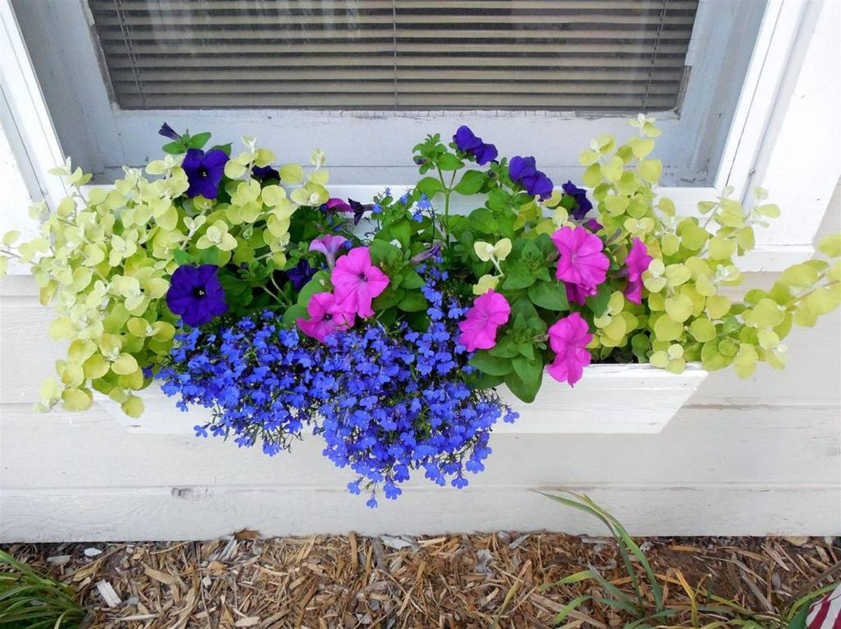 flower-box.JPG.1024x0.JPG
