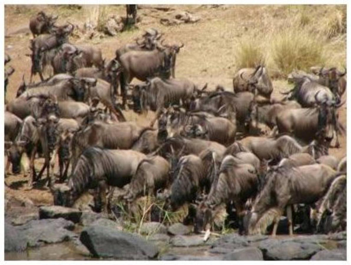 The Great Migration.jpg