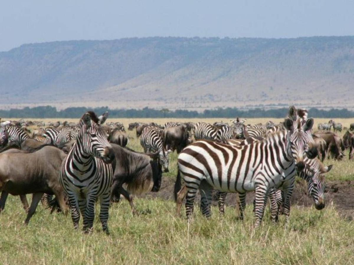 Zebra herds.jpg