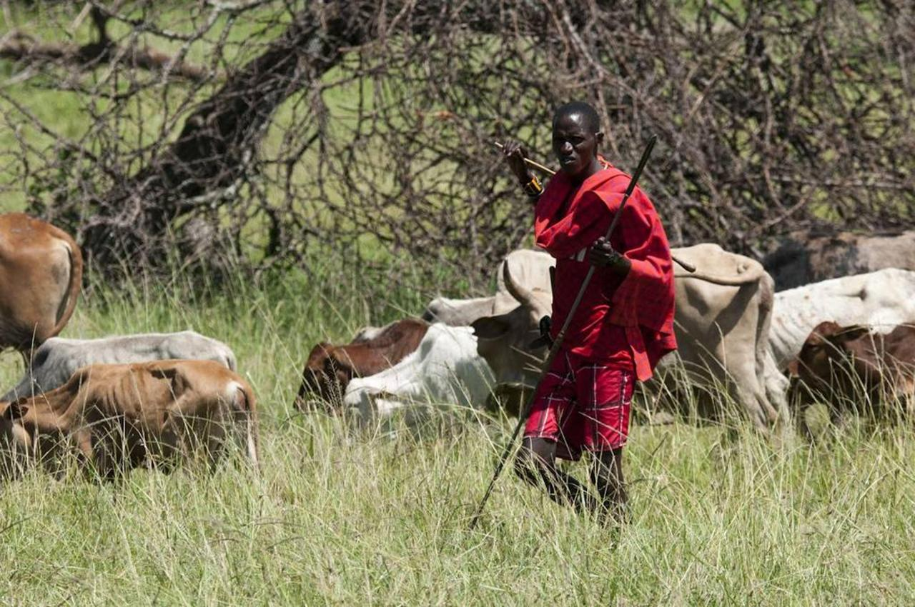 Maasai herdsman.jpg