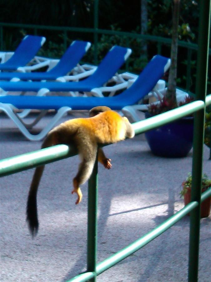 laying-monkey-titi.jpg.1024x0.jpg