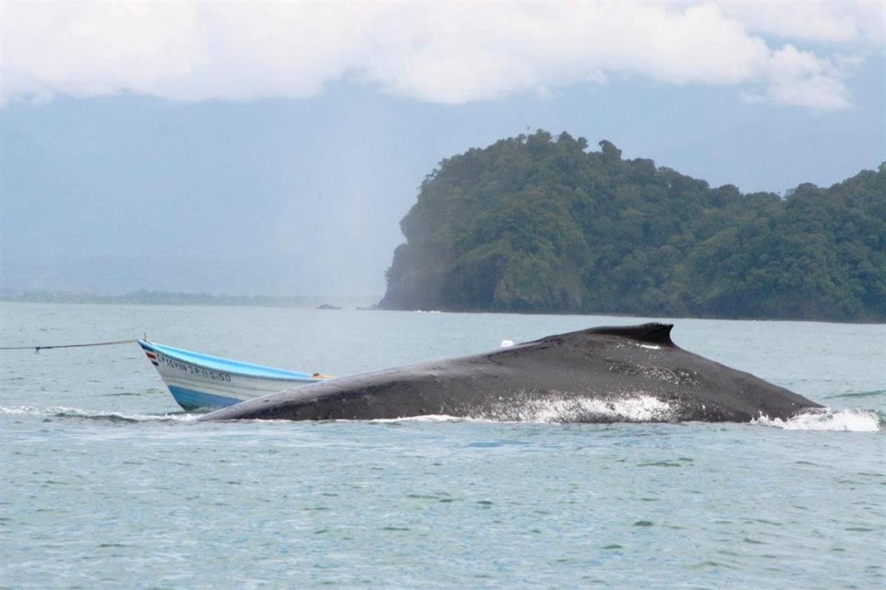 whale-and-boat.jpg.1024x0.jpg