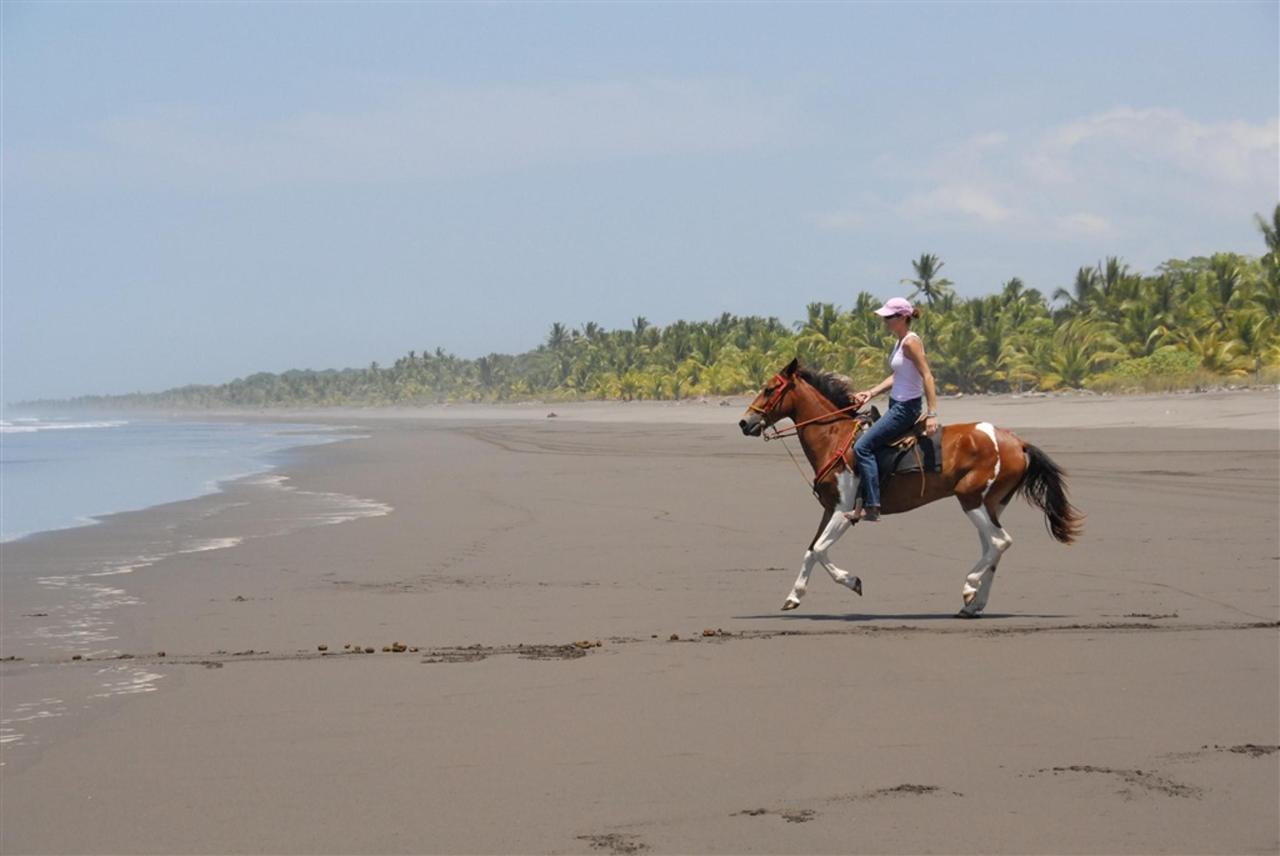 horse-beach-shot-300-dpi.jpg.1024x0.jpg