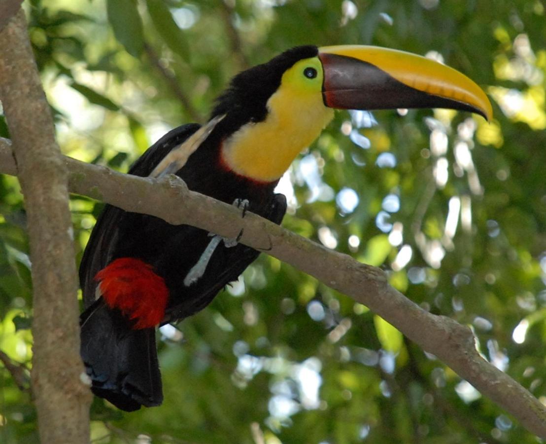 toucan-300-dpi.jpg.1024x0.jpg