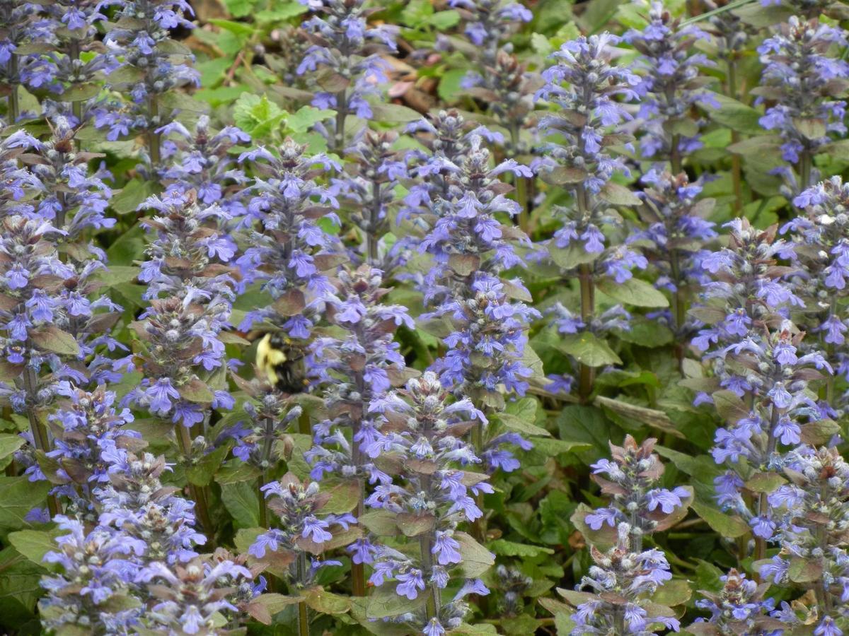 wildlife-011.JPG.1920x0.JPG