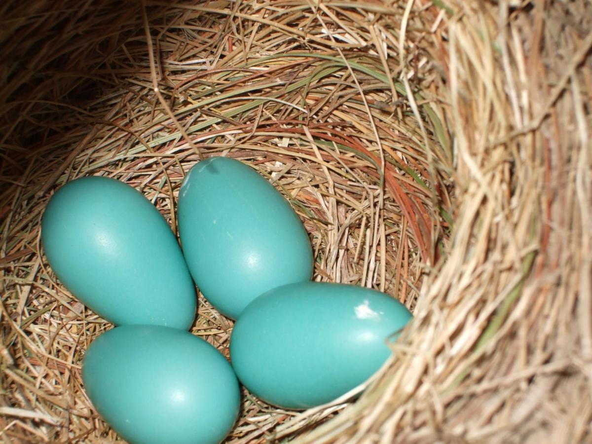 june-2011-eggs-in-a-nest.jpg.1920x0.jpg