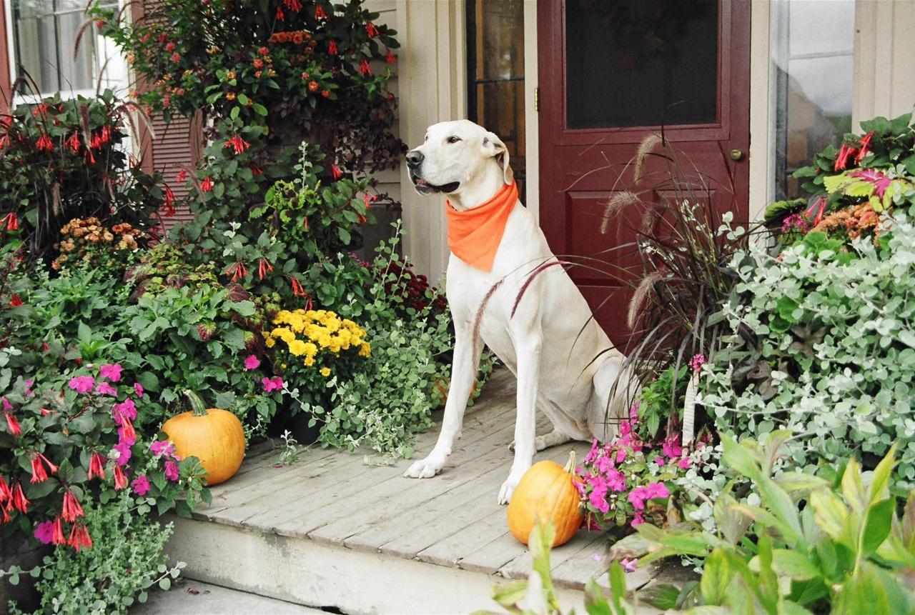 dog-on-porch-1.jpg.1920x0.jpg