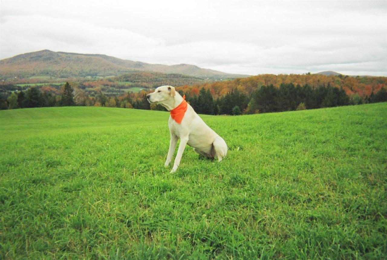 dog-with-view-1.jpg.1920x0.jpg