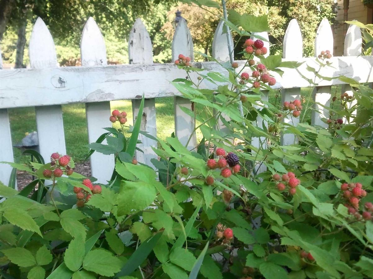 berries2013.jpg.1920x0.jpg