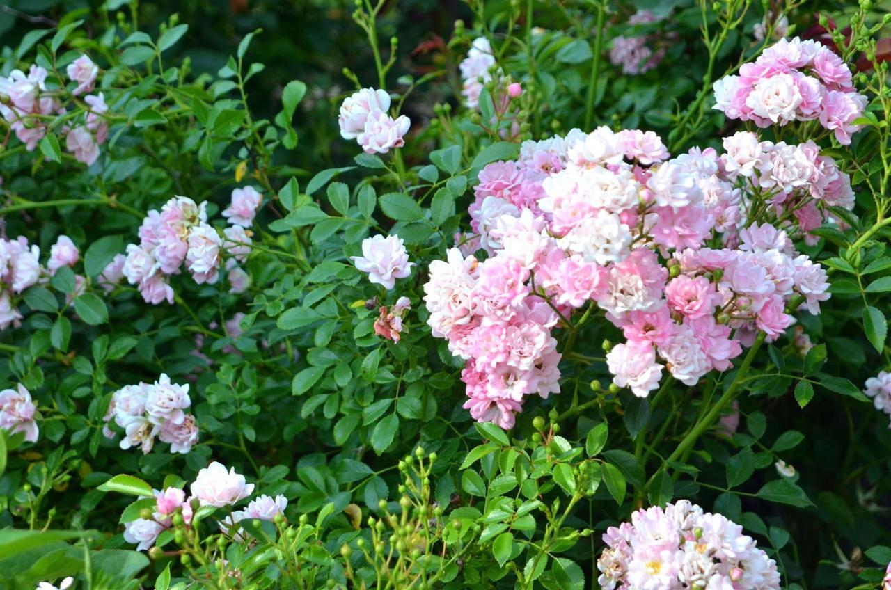 12-gardens12.jpg.1920x0.jpg