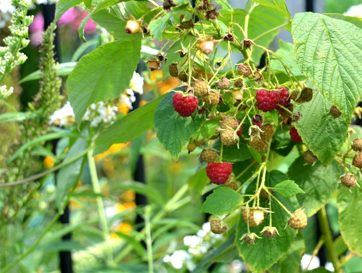 raspberries.jpg.1920x0.jpg