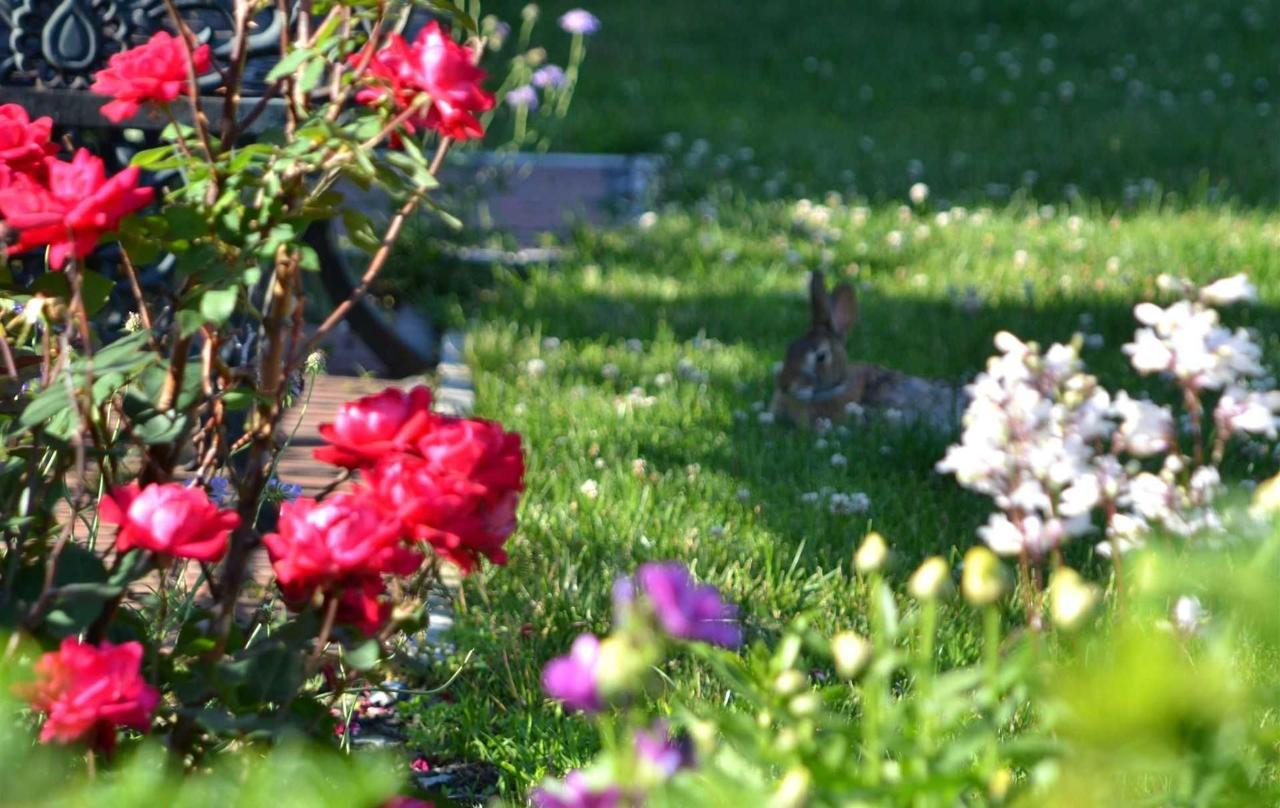 roses7.jpg.1920x0.jpg