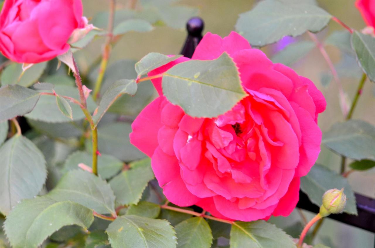 12-gardens-4-1.jpg.1920x0.jpg