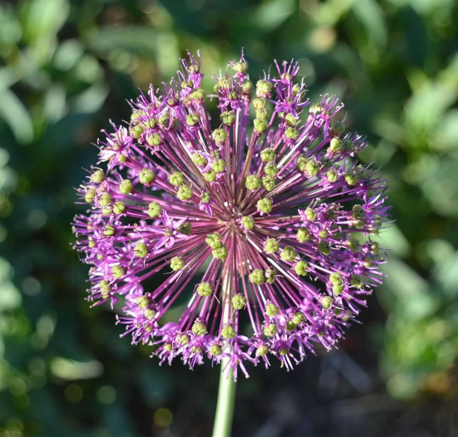 ugflower.jpg.1920x0.jpg