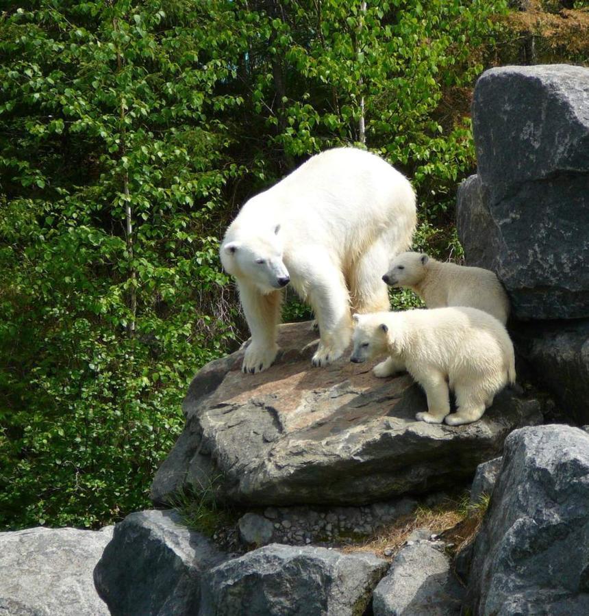 Zoo Sauvage St-Felicien.jpg