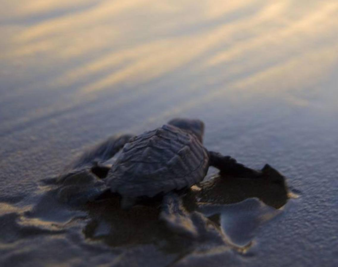 turtle-release-villa-tortuga.png