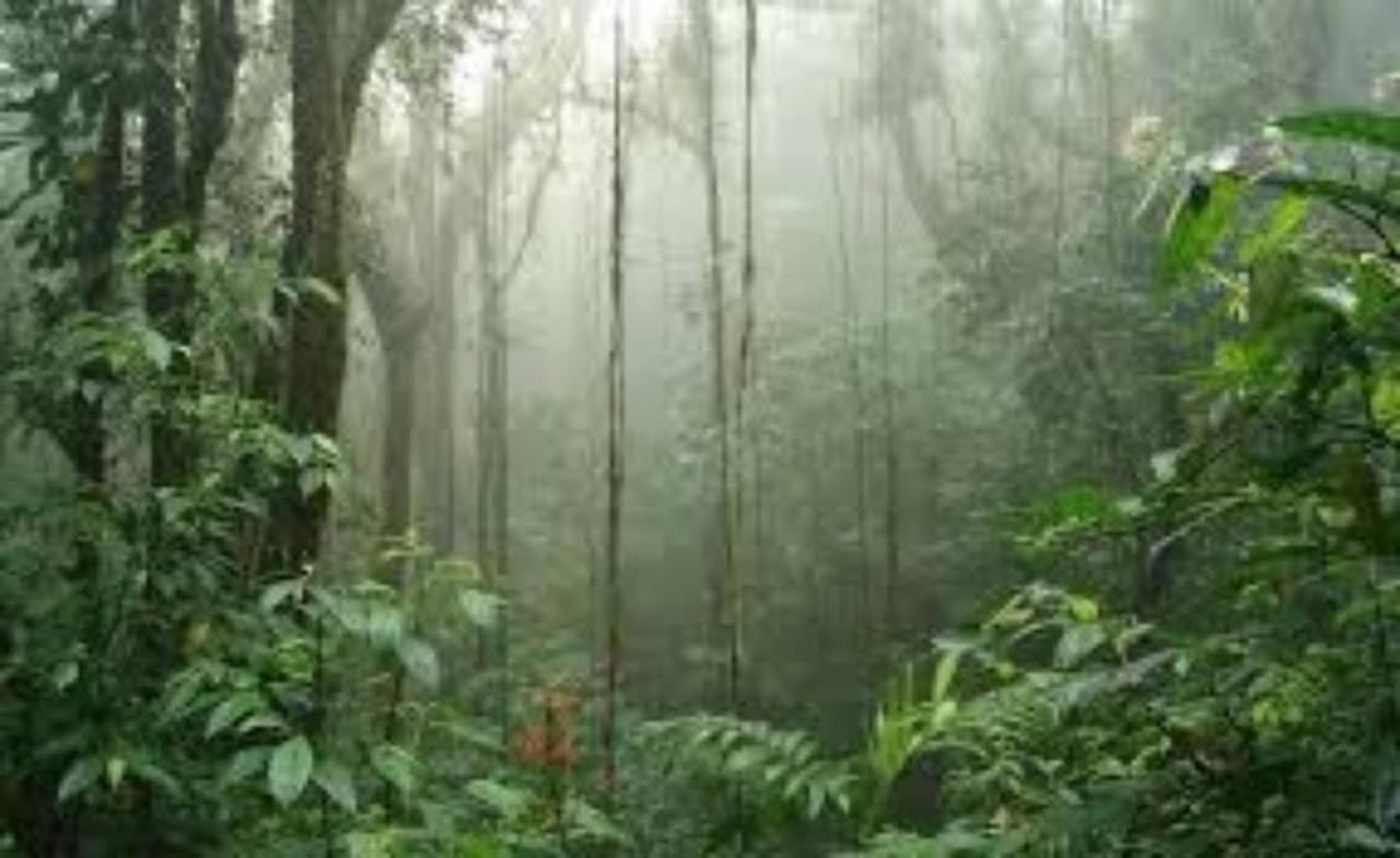 Monteverde, Florest,Hotel Arenal Kioro Suites & Spa, La Fortuna, Costa Rica.jpg