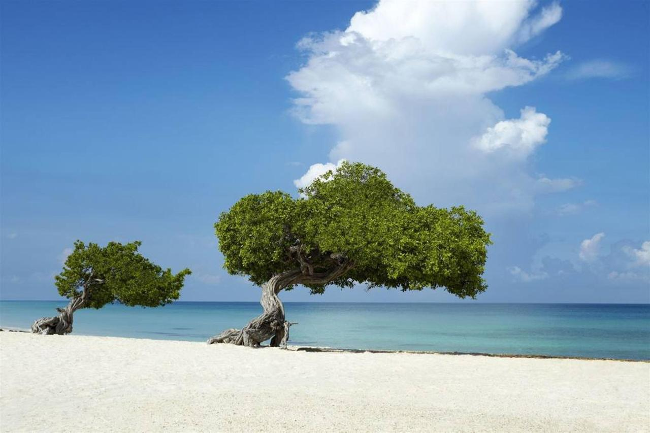 Aruba_HolidayInnAruba2.jpg