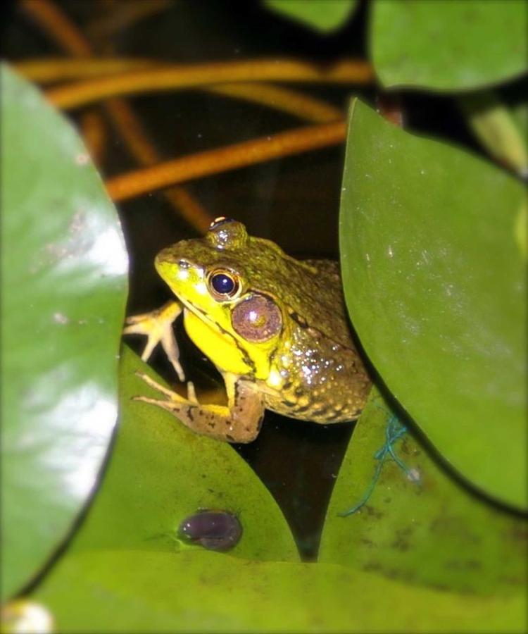 frog-copy.jpg.1920x0.jpg