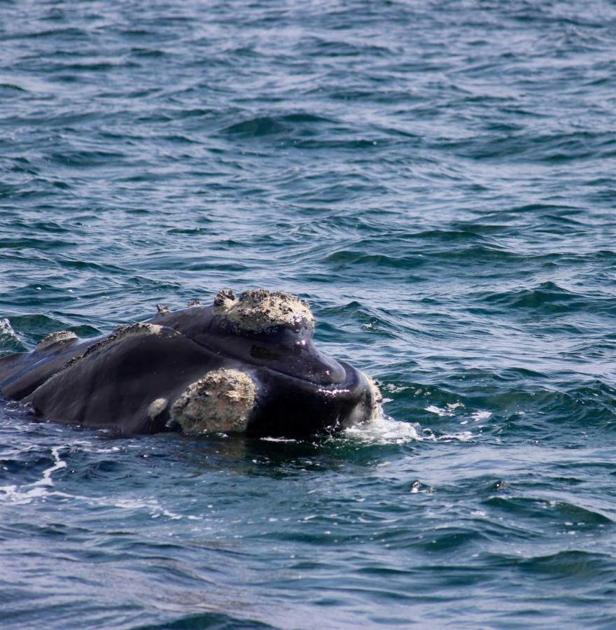 whales-2.jpg