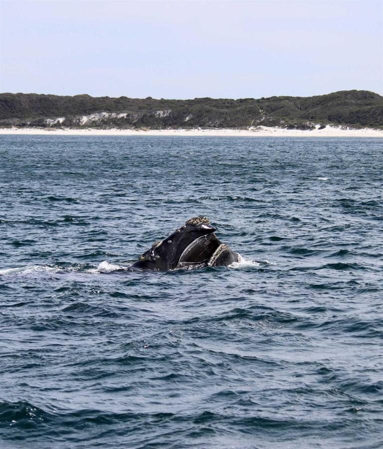whales-5.jpg