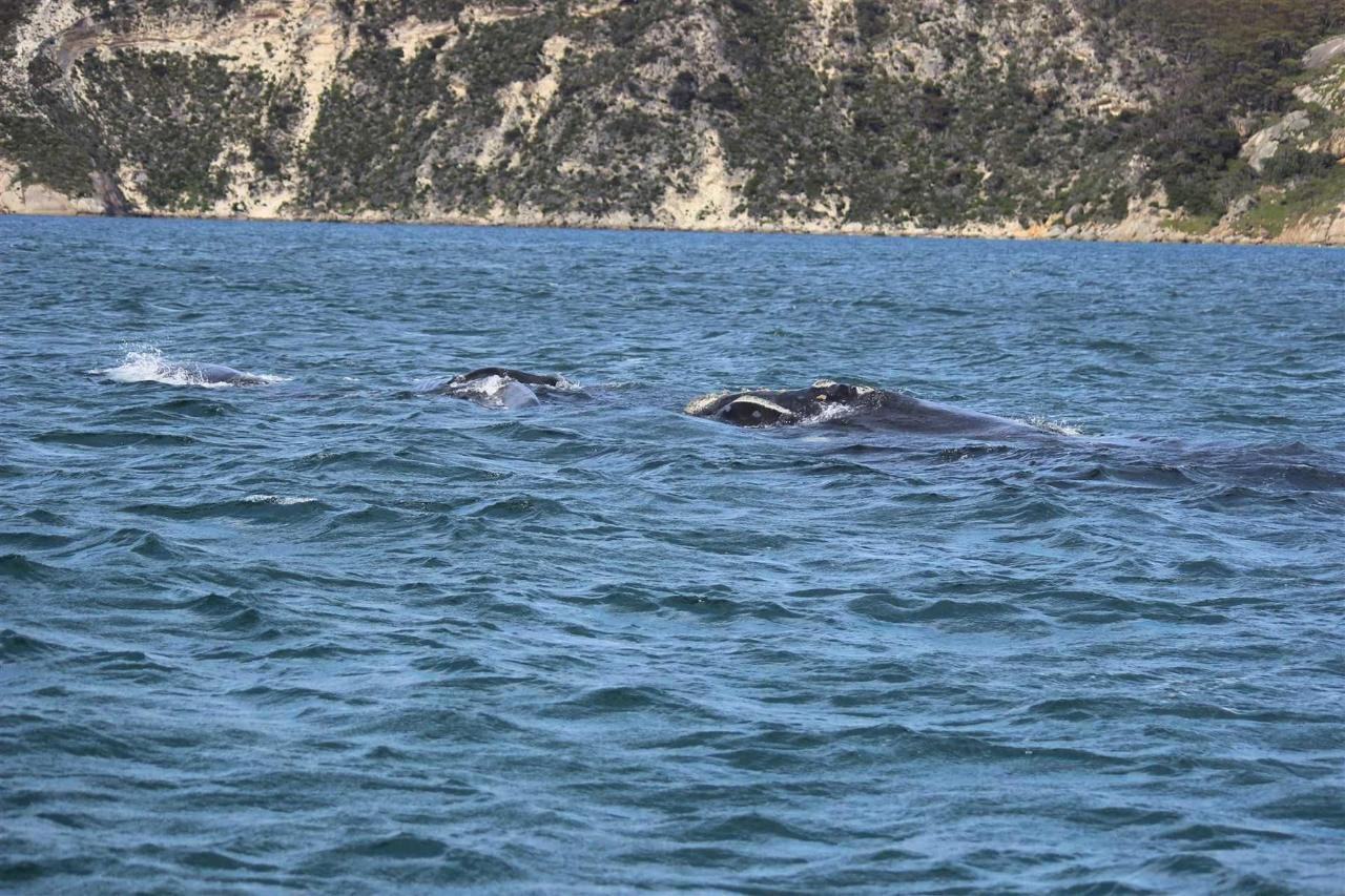 whales-6.jpg