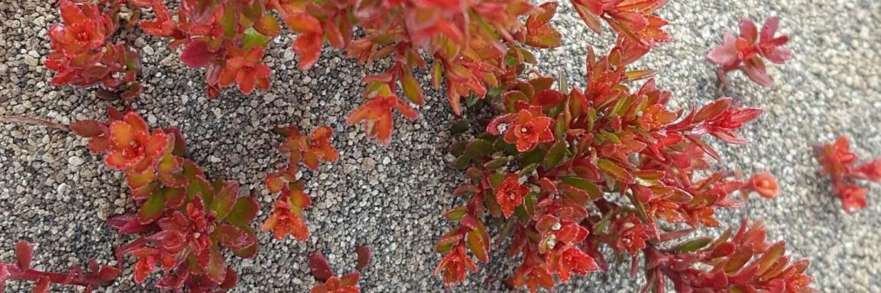 rojo-y-arena.jpg