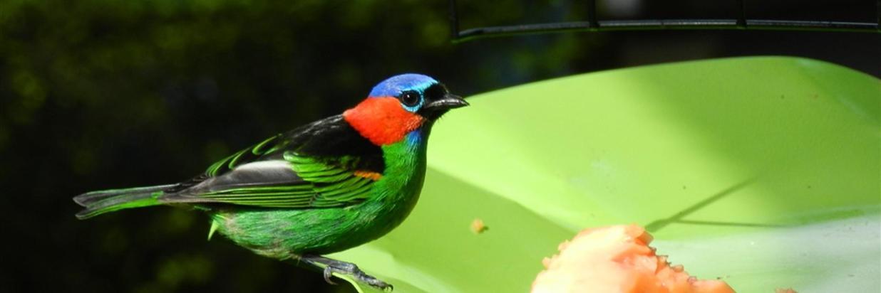 Pássaros(6).jpg